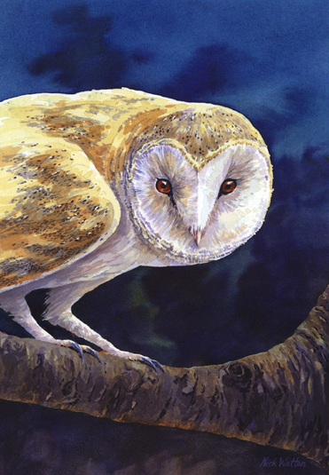 'A moonlit night' (Barn Owl)