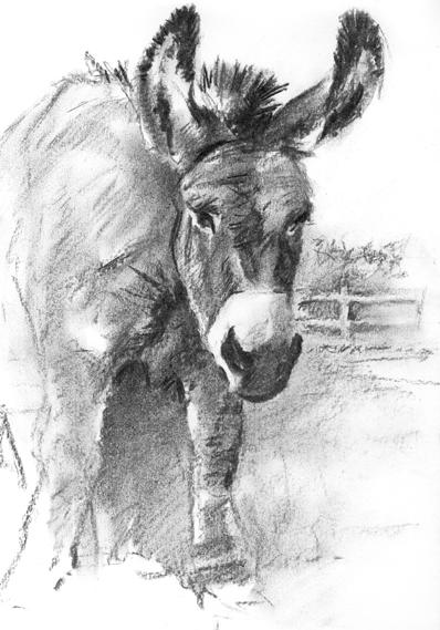 'Devon Donkey'
