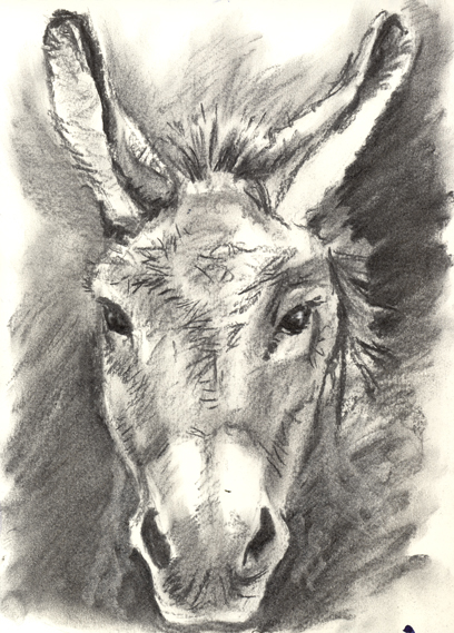 Charcoal sketch of a Donkey Sketch