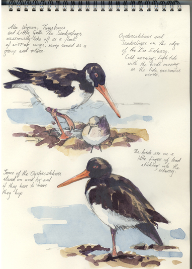 'Oystercatchers'