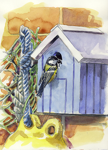 Watercolour sketch of a Great Tit on the Nestbox