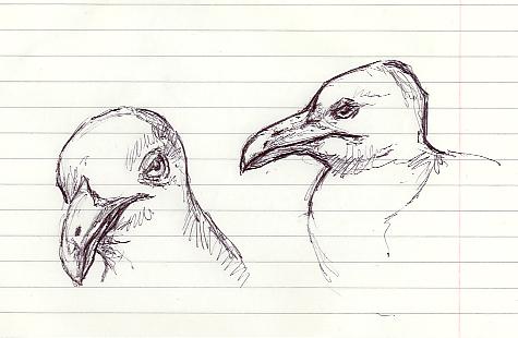'Sea Gull'