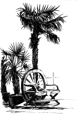 Pen sketch of a palm with seat underneath.