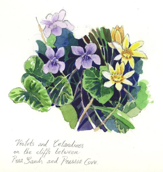 'Violets & Celandaines'