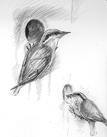 'The Lunchtime Sketches – Nuthatch Nestbox'