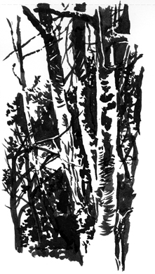 'Birch Trees'