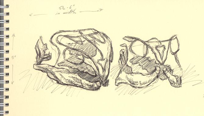 Rhynchosaur pen sketch