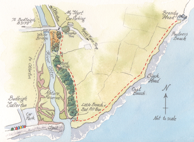 A watercolour map of the Otter Estuary walk