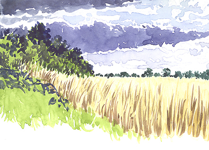 Watercolour sketch of Reed Beds