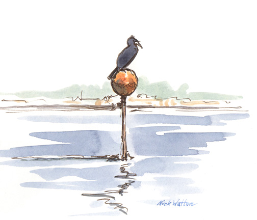 Watercolour sketch of a Cormorant, Just Sitting About