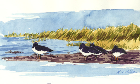 Watercolour sketch of Oystercatchers sitting waiting for the tide to turn.